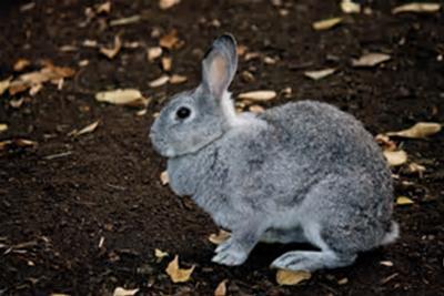 小さな灰色の動物 class=